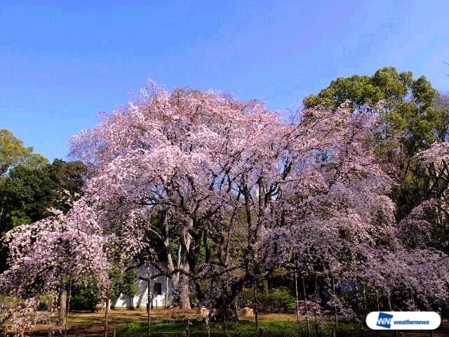 29日(火)東京都六義園からのウェザーリポート