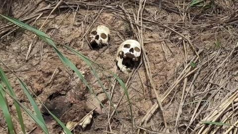 暴力が続くコンゴ、複数の集団墓地見つかる(字幕・20日)