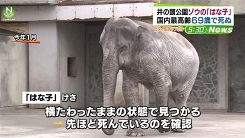 井の頭公園、ゾウの「はな子」が国内最高齢69歳で死ぬ