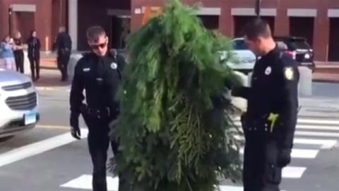 米で「歩く木」出現、 交通混乱させた容疑で仮装の男を逮捕