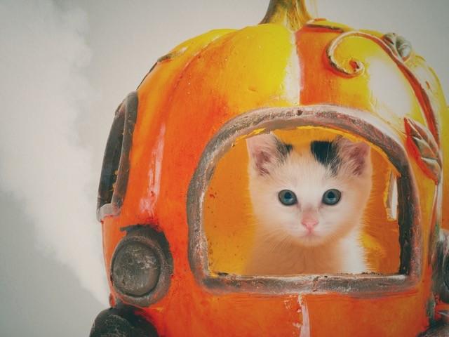 世界ネコの日記念!大丸梅田店が全館をあげて「ねことしあわせ DAYS」を開催、8月7日〜