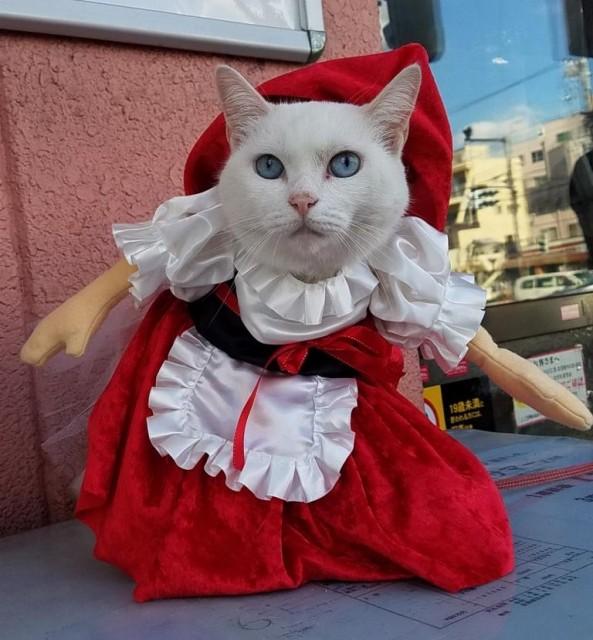 まさにリアル招き猫!コスプレ衣装に身を包んだ「看板猫」に会える宝くじ売場3選