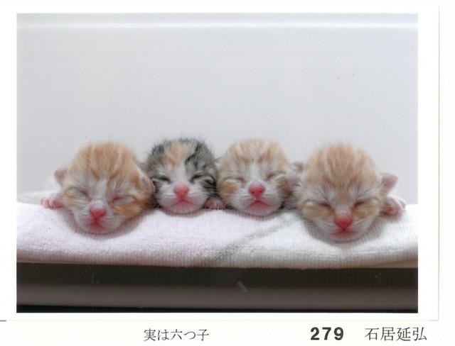 猫は、生涯の伴侶!500匹と暮らした文豪「大佛次郎」の記念館が猫の写真を募集しているニャ