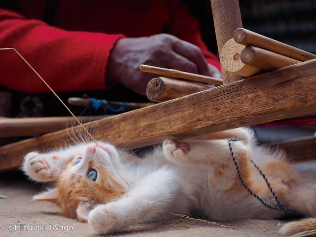 子猫の写真にまみれて1年の疲れを癒やすのニャ…岩合光昭写真展「こねこ」1月5日まで大阪で開催中