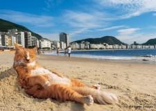 コパカバーナビーチで人気の猫「シキンニョ」