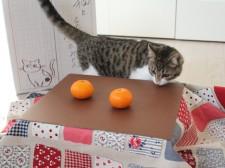ネコ助けフォトコンテスト
