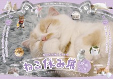 人気の猫イベント「ねこ休み展」の春コレクションが4月〜5月に静岡と広島のパルコで開催