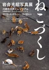 島猫や神奈川の猫など、200点以上の作品を楽しめる岩合光昭写真展「ねこづくし」6月末まで開催