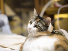 猫と犬のアレルギー皮膚疾患セミナー