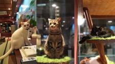 ねこ浴場で子猫の譲渡会を開催