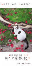 岩合光昭写真展「ねこの京都、秋」