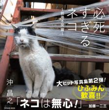 必死すぎるネコ 〜前後不覚篇〜