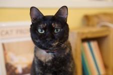 SAVE CAT CAFE(セーブキャットカフェ)