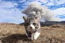 旅猫ニャン吉写真展×猫の音楽会vol.3
