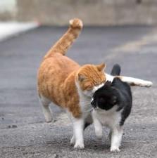 写真展「必死すぎるネコ〜前後不覚 篇〜」