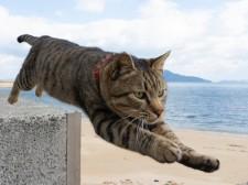 五十嵐健太の猫写真展