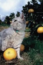 岩合光昭 いよねこ 猫と旅する写真展