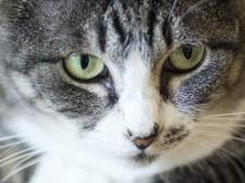 猫が新型コロナウイルスに感染