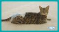 愛猫におむつを履かせられる?日本初の猫用おむつ「マナーウェアねこ用」のハウツー動画が公開