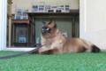 山中湖で暮らす看板猫ちゃんが登場!ネコが主役の紀行番組「旅猫ロマン」の最新話が5/23に放送