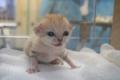 国内初!砂漠の天使「スナネコ」の赤ちゃんが誕生、貴重な写真や動画を公開するニャ