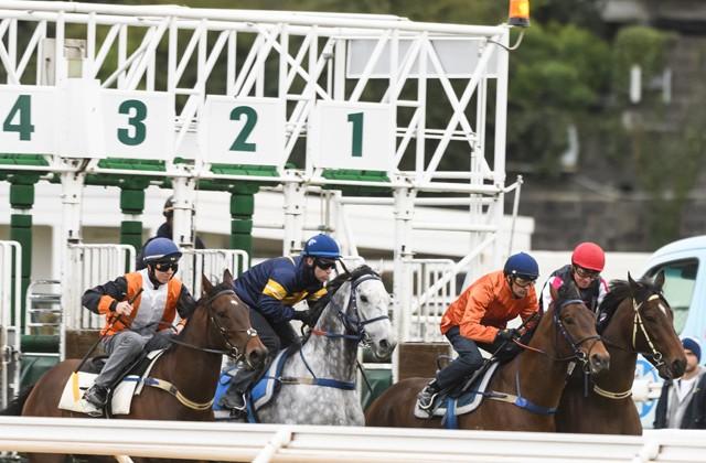 引退危機の豪G1馬シャトークア、ジャンプアウト成功で現役続行に望み
