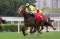 香港年度代表馬ワーザーが来日、宝塚記念へ向けて調整
