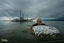 フィリピンの漁師が浅瀬を歩き、捕れた魚を岸へと運ぶ。(ADAM DEAN/National Geographic)