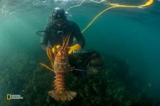 プンタ・アブレオホスの住民は、アワビやロブスターのような価値の高い水産資源を慎重に管理している。(Photograph by Thomas P. Peschak, National Geographic)