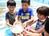 絶滅危惧種「カスミサンショウウオ」小学校のプールで大量発見