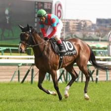 5月に新潟「千直」を勝っているフィドゥーシアは上位人気が予想される