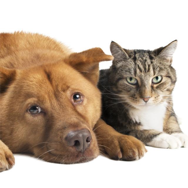 ペットの殺処分をなくすためにはどうしたら?