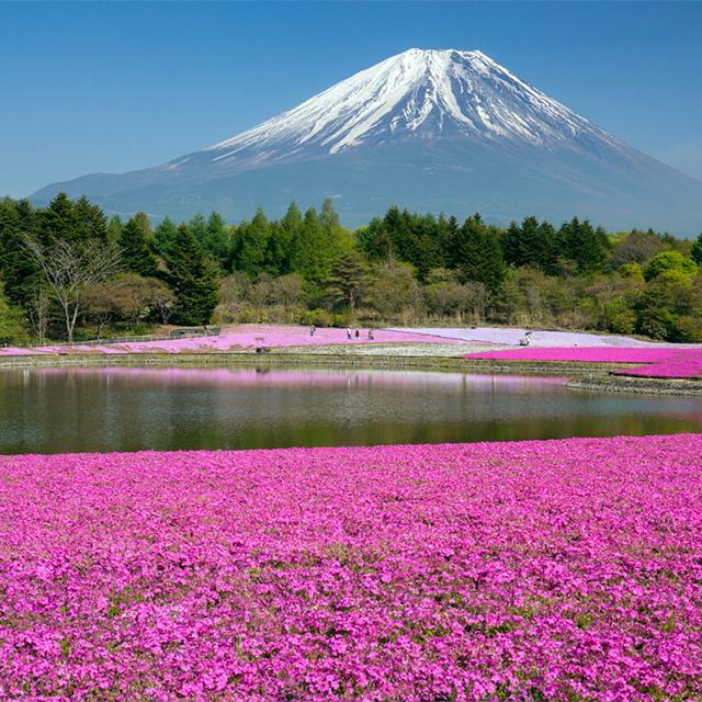 高山病を治すには?トイレにはチップが必要?富士登山の注意点