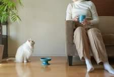 猫のヒゲストレスも軽減するニャ!波佐見焼の陶磁器メーカーが猫用のフードボウルを開発