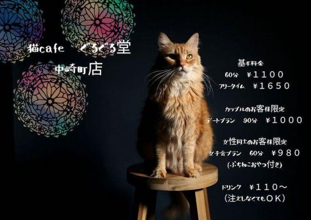 南アジアのエスニックな雰囲気が漂うニャ〜猫カフェ「ぐるぐる堂」大阪・中崎町にオープン