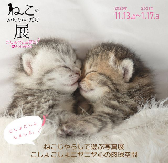 花江夏樹×沖昌之も参加!2,000枚のネコ写真に癒やされる「ねこがかわいいだけ展」池袋で開催