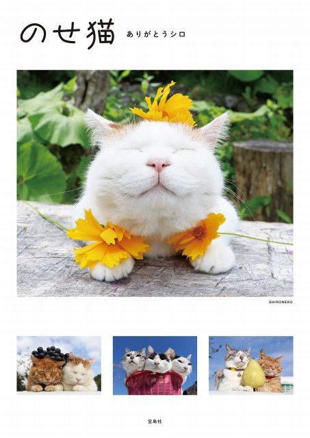 かご猫・のせ猫として人気を博した「シロ」の死去から約半年、総集編となる写真集が登場