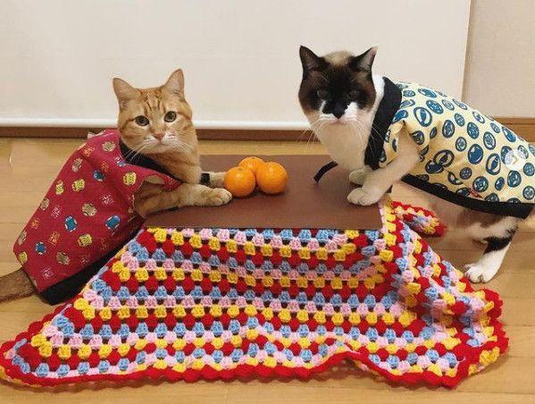 猫専用のコタツが付いてくる和歌山みかんが今年も発売!ネコ神社ハウスも当たるチャンス