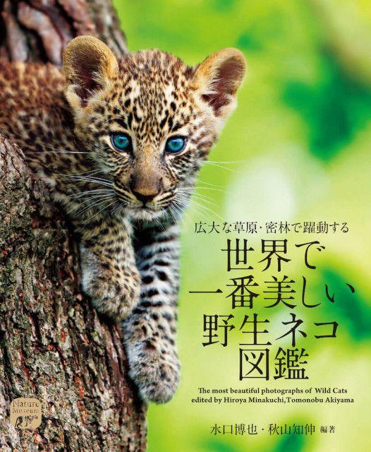ネコ科好きにはたまらニャい!色鮮やかな写真で楽しめる「世界で一番美しい野生ネコ図鑑」