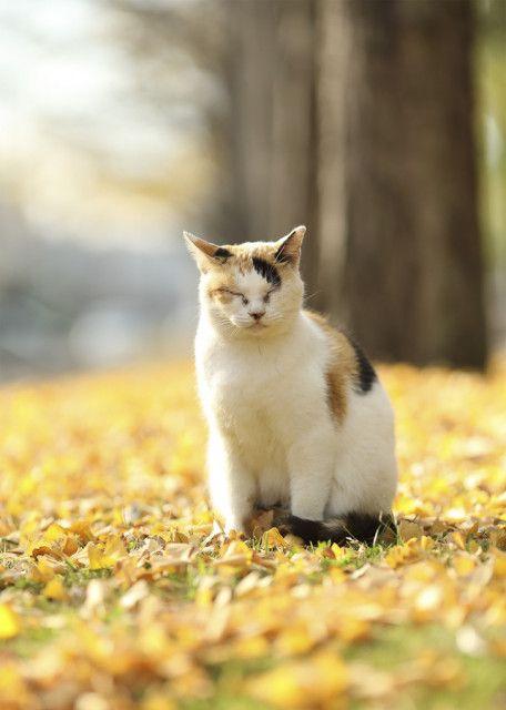 展示作品は全部で800点以上!ネコや動物の作品を集めた「もふあつめ展」が大阪で開催