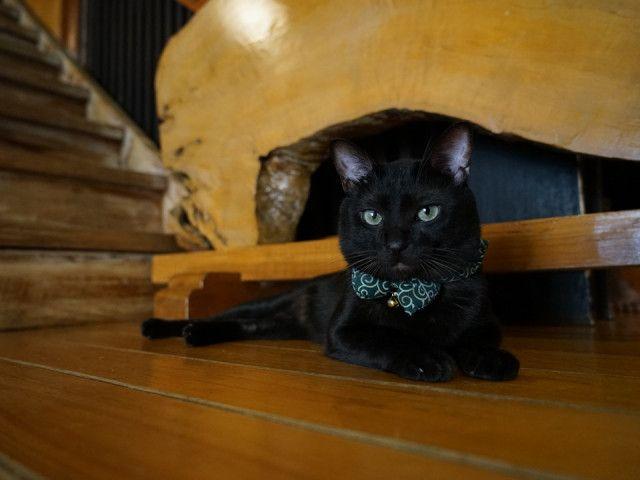 旅館、民宿、ゲストハウスの猫にフォーカス!紀行番組 旅猫ロマンの傑作選5〜6話は「お宿の猫」