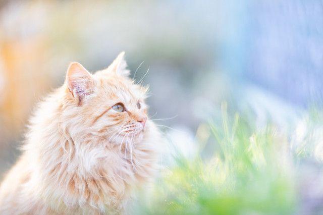 話題の立ち猫から海辺の猫まで!13名の写真家によるネコの写真展「ニャン都物語」横浜で開催