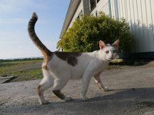最新話は日本各地の猫に出会うスペシャル版!ネコを訪ね歩く紀行番組「旅猫ロマン」第60話を公開