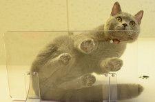 下からネコを眺める贅沢なひと時♪壁材に合わせて取付方法が選べる透明キャットステップが登場
