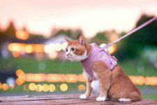 ネコ専用のハーネス