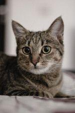 愛猫のがんとどう向き合う…?ねこ専門医・服部幸獣医師のWEBセミナーが4/17に開催