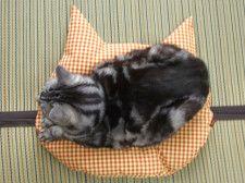 猫がスッと座りたくなる!?羽毛製品メーカーが猫のために開発したこだわり仕様の座布団