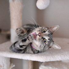 猫の写真850枚を一挙にパネル展示!人気投票や猫グッズも集まる「ねこにすと」新宿で開催決定