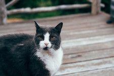 奈良市が犬猫の殺処分ゼロを2年連続で達成したと発表、譲渡した数は過去最高を記録