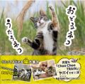 ネスミスが絶賛のネコザイルも収録、沖昌之さんの新作写真集『おどるネコうたうネコ』